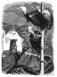 Лиса и Индюшки (Гранвиль)