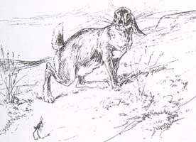Львиный указ (Вимар)