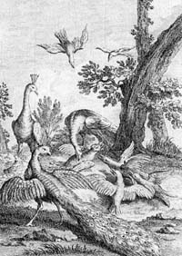 Ворона в павлиньих перьях (Удри)