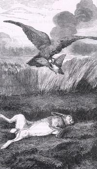 Заяц и Куропатка (Е. Ламберт)