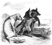 Волк и Лиса (Гранвиль)