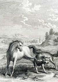 Волк и Конь (Удри)