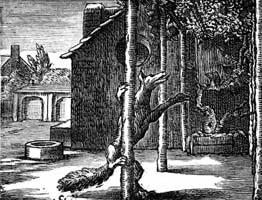 Лисица и Виноград (Ф. Шово)