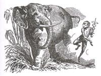 Слон и Обезьяна Юпитера (К. Жирарде)