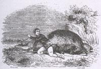 Волк и Охотник (Ж. Давид)