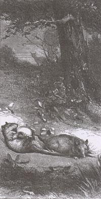 Две Крысы, Яйцо и Лиса