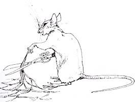 Лев и Мышь (Вимар)