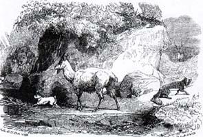 Больной Лев и Лисица (Ж. Давид)