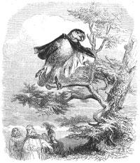 Два Попугая и Король с Сыном (Гранвиль)