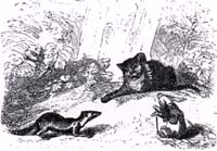 Кот, Ласочка и Кролик (Адамард)