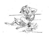 Волк и Охотник (де Вимар)