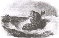 Обезьяна и Дельфин (Ж. Давид)