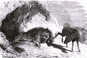 Лев состарившийся