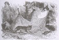 Кошка и Мышь (Ж. Давид)