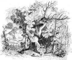 Виноградник и Олень (Гранвиль)