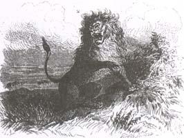 Лев и Комар (И. С. Панов)
