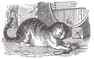 Старый Кот и Мышонок (К. Жирарде)
