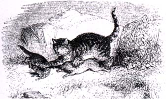 Кот, Ласочка и Кролик (Ж. Давид)