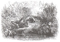 Солнце и Лягушки (Ж. Давид)