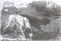 Собаки и ослиная Туша (К. Жирарде)