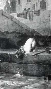 Собака и ее тень (Е. Ламберт)