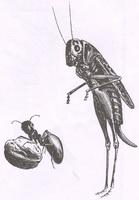 Стрекоза и Муравей (Е. Ламберт)