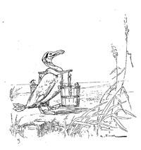 Рыбы и Баклан (де Вимар)
