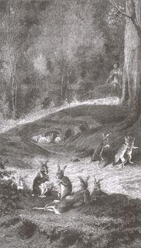 Кролики (Е. Ламберт)