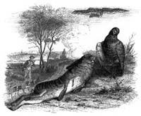 Заяц и Куропатка (Гранвиль)
