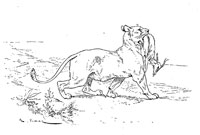 Львица и Медведица (де Вимар)