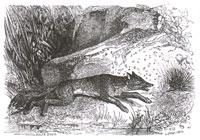 Лисица, Мухи и Еж (Ж. Давид)