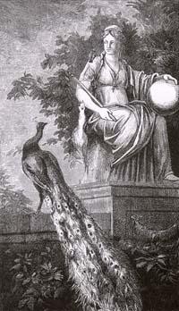 Павлин, жалующийся Юноне (Е. Ламберт)