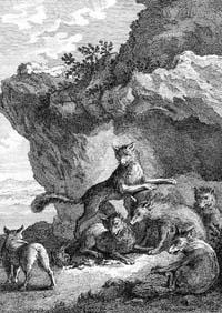 Бесхвостая Лисица (Удри)