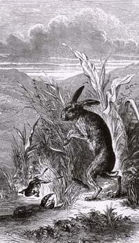 Заяц и Лягушки (Е. Ламберт)