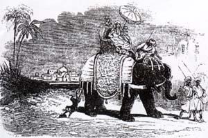 Крыса и Слон (Ж. Давид)