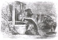 Волк и Лиса (Ж. Давид)
