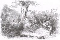 Стоглавый и стохвостый Драконы (гравюра, Париж, 1842 г.)