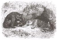 Львица и Медведица (Ж. Давид)