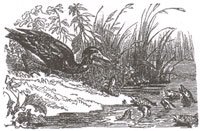 Рыбы и Баклан (К. Жирарде)