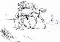 Лошадь и Осел (Вимар)