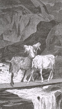 Две Козы (Е. Ламберт)