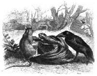 Ворон, Газель, Черепаха и Крыса (Гранвиль)