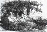 Шершни и Пчёлы (Ж. Давид)