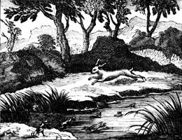 Заяц и Лягушки (Ф. Шово)