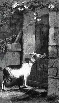 Волк, Коза и Козленок (Е. Ламберт)