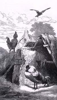 Два Петуха (Е. Ламберт)