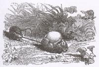 Две Крысы, Яйцо и Лиса (К. Жирарде)