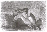 Рыбы и Баклан (Ж. Давид)