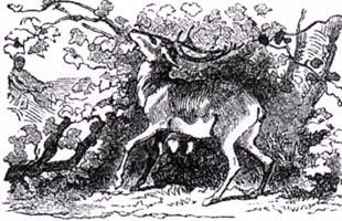 Виноградник и Олень (К. Жирарде)