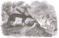 Волк и Пастухи (Ж. Давид)
